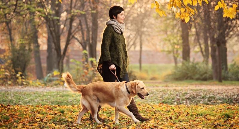 Die gesunde Ernährung ist die eine Seite – wichtig ist es jedoch, dem Hund auch genügend Bewegung zu ermöglichen. (#05)
