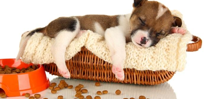 Hunde gesund erhalten: 16 Regeln der optimalen Hundeernährung