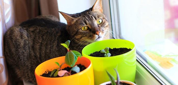 Haustiere & giftige Pflanzen: Das sollten Sie beachten!
