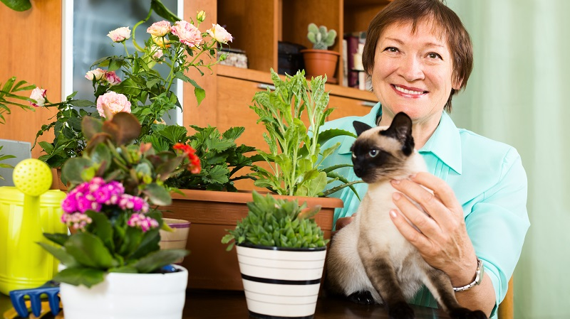 Haustiere und Pflanzen können sich zwar eine Wohnung teilen, dabei muss der Zweibeiner allerdings für die Vierbeiner mitdenken und dafür sorgen, dass sie nur verträgliche Pflanzen naschen können. (#02)