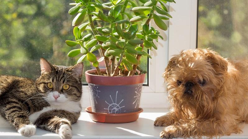 Teilweise frisst Ihr Haustier aus Langeweile an den Zimmerpflanzen herum, was logischerweise dann geschehen wird, wenn Sie nicht zu Hause sind. (#01)