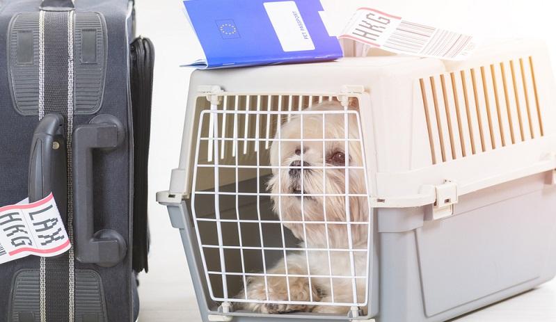 Eine Flugreise mit Hund muss sehr gut geplant werden. Zunächst muss man entscheiden, ob man seinem vierbeinigen Freund eine solche Reise wirklich antun will, denn sie bedeutet Stress. (#03)