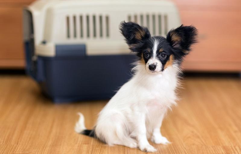 Es ist grundsätzlich eine gute Idee, den Hund mit in den Urlaub zu nehmen, denn es stärkt den Zusammenhalt und verhindert, dass der Vierbeiner während der Ferienzeit im Tierheim untergebracht werden muss. (#01)