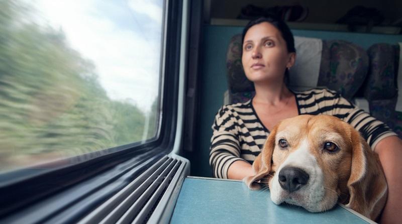 Eine Zugreise ist für Hundehalter und ihre Vierbeiner nur bedingt geeignet. (#04)