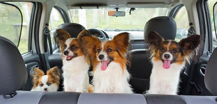 Unterwegs mit dem Hund: So reist der Vierbeiner sicher