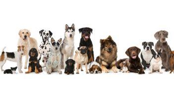 Welcher Hund passt zu Ihnen? Tipps zur Auswahl der geeigneten Hunderasse