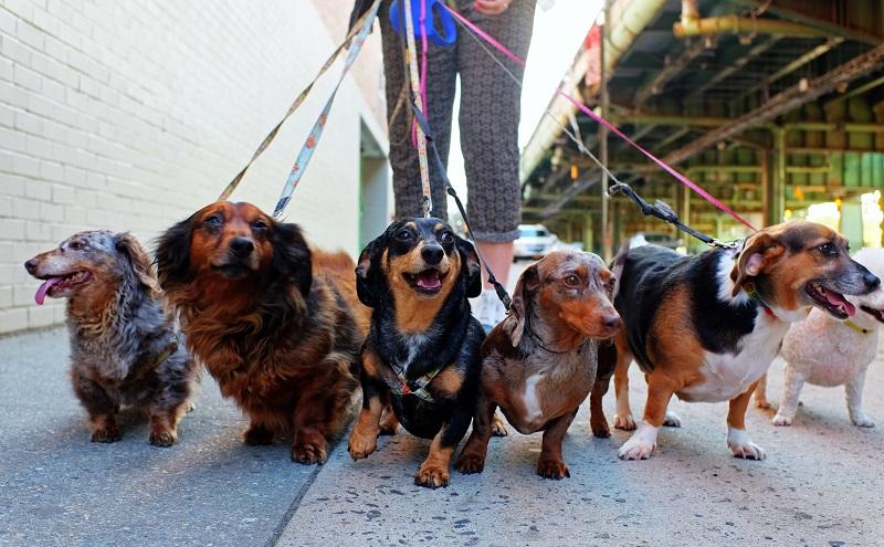 geeignete Hunderasse: Je kleiner ein Hund, desto weniger Auslauf benötigt er. (#03)