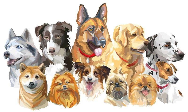 Es gibt hunderte Hunderassen auf der Welt. Sie werden in kleine, mittelgroße, große und sehr große Rassen eingeteilt. (#04)