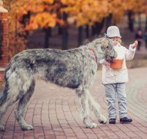 Eine der größten für Familien geeigneten Hunderassen ist der Irischer Wolfshund. (#07)