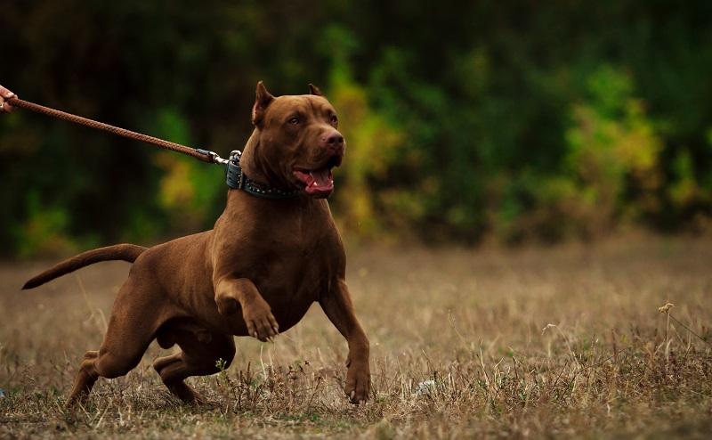 Bitte berücksichtigen Sie, dass Ihr Hund zum Beispiel einen Unfall verursachen kann, bei dem Menschen zu Schaden kommen. (#02)