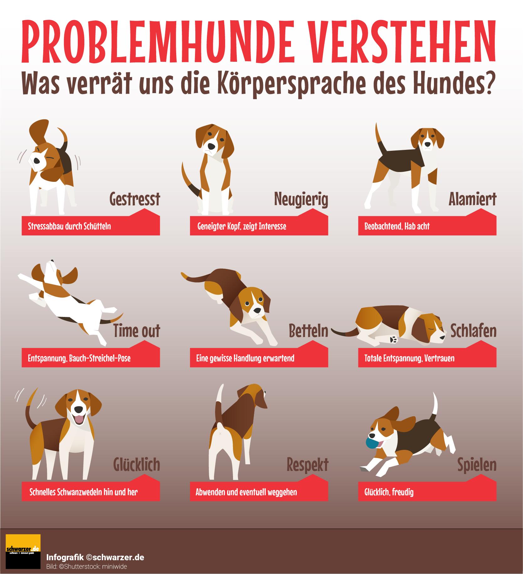 Infografik: Problemhunde verstehen - was verrät uns die Körpersprache des Hundes?