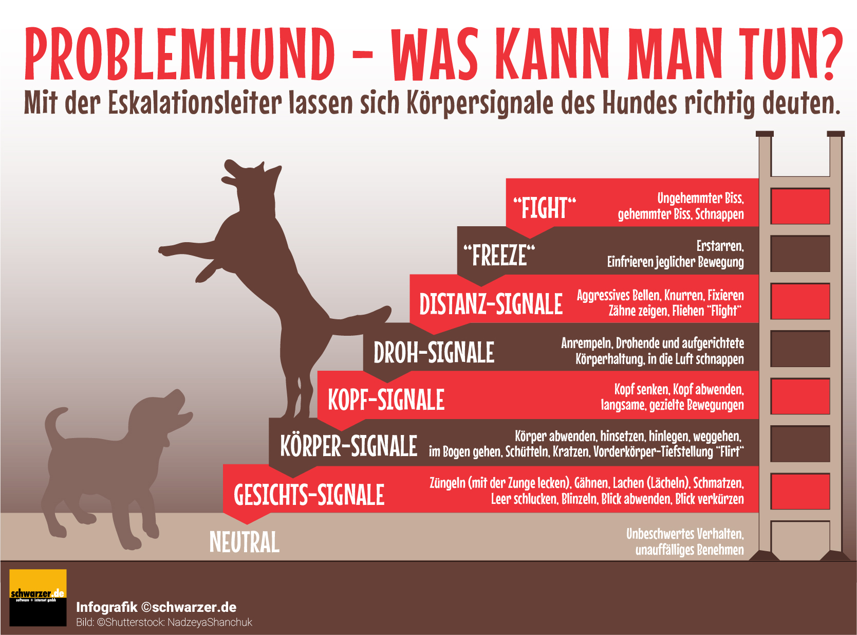 Infografik: Problemhund - was kann man tun? Mit der Eskalationsleiter lassen sich Köpersignale richtig deuten.