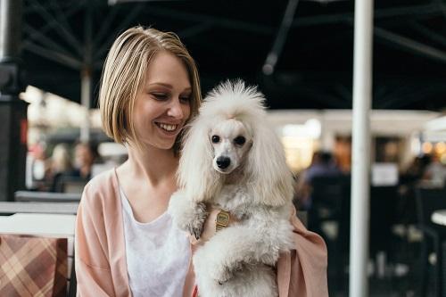 Neben der Rasse Phalene gehören auch Zwergpudel zu den Rassen der Minihunde (#07)