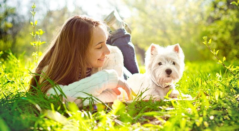 Die weißen West Highland Terrier sind wachsam aber manchmal stur, sie brauchen viel Bewegung und einen mittleren Pflegeaufwand. (#02)
