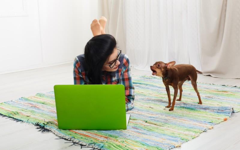 Nicht jeder Hund der bellt, ist gleich ein Problemhund, denn Gründe für das Bellen gibt es viele. (#1)