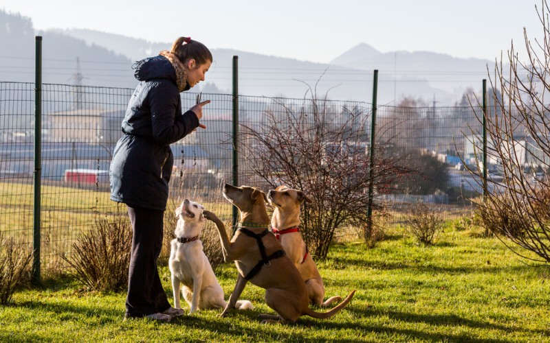 Wer einen Problemhund zu Hause hat, sollte nicht als ersten Schritt ins Tierheim gehen. Häufig kann ein Hunde Trainer helfen und die Probleme in Zusammenareit mit dem Hundehalter und dem Hund beseitigen. (#2)