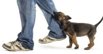 Problemhund: Letzter Ausweg Tierheim?