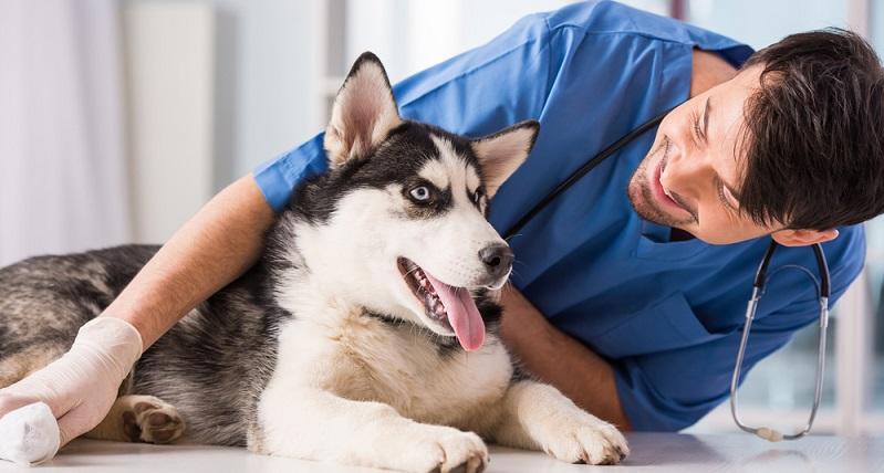 Um für eine gute Gesundheit zu sorgen, ist es sinnvoll, vorsichtshalber einen Tierarzt zurate zu ziehen. (#05)