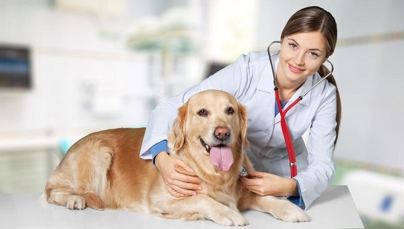 Einen Tierarzt sollten Sie jedoch in jedem Fall aufsuchen, wenn die Temperatur über 41 Grad steigt. In diesem Fall besteht eine akute Gefahr für das Tier. (#06)