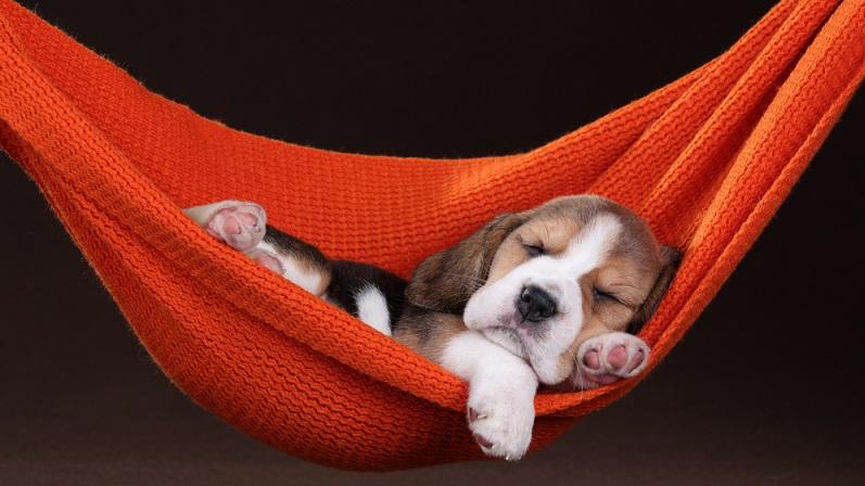 Das Tier wirkt in diesem Fall ungewöhnlich schlapp und lustlos. Es schläft viel und frisst wenig oder überhaupt nicht. (#02)
