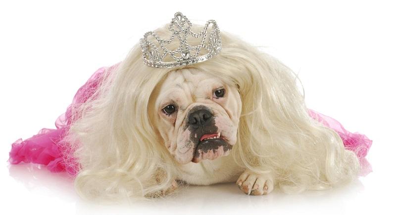 Jedes Jahr findet in Kalifornien ein Wettbewerb statt, der herausfinden soll, welches Tier der hässlichste Hund der Welt ist. (#01)