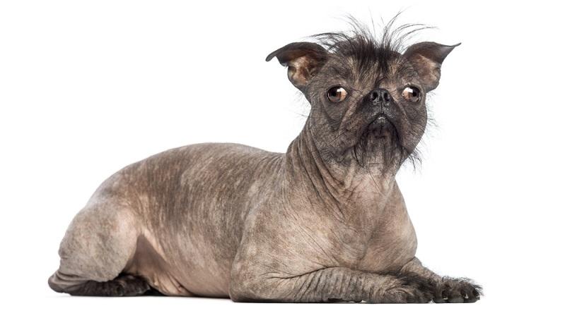 Menschen, die nicht gerade gut aussehen, leiden unter dieser Eigenschaft sehr. Das kann zu einer schweren Beeinträchtigung der sozialen Kontakte führen. Doch wie sieht das bei Hunden aus? (#07)