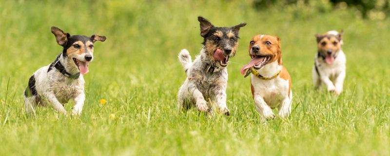 Der Hund sollte für einige Zeit beobachtet werden, damit einschätzbar wird, ob sich das gezeigte Verhalten verstärkt oder verringert.
