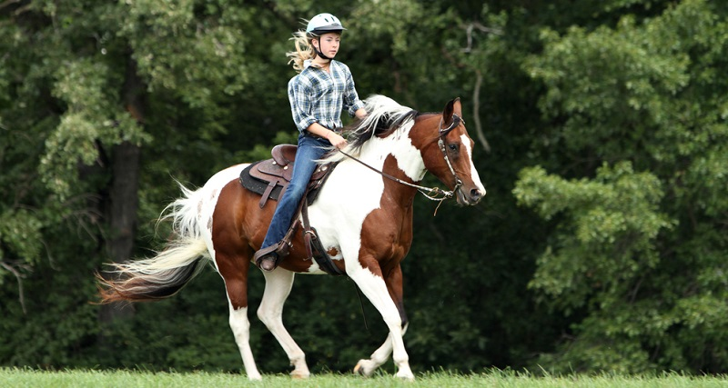 Möchten Sie ein Pferd beim Züchter kaufen, sollten Sie sich vorab über diesen informieren. (#04)