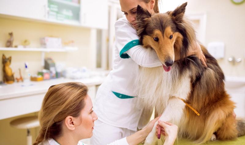 Mit einem CT oder einem MRT kann man versteckte Blutungen finden und Organschäden diagnostizieren. (#04)