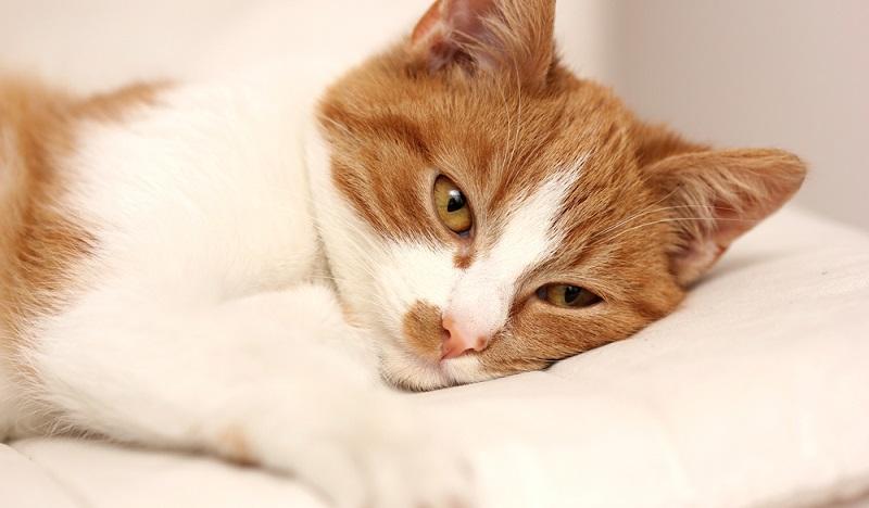 Ist die Katze erkrankt, muss sie schnell die richtige Behandlung bekommen. (#1)