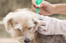 Kampf gegen Zecken bei Hunden und Katzen