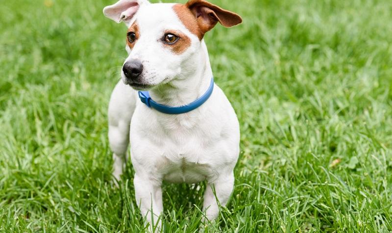 Es gibt viele Mittel für den Zeckenschutz bei Hunden und Katzen. (#05)