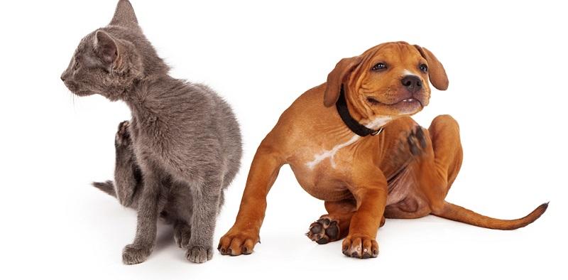 Während Menschen sich durch Kleidung einigermaßen zuverlässig vor Zecken schützen können, ist das bei Hunden und Katzen keine Option.(#02)