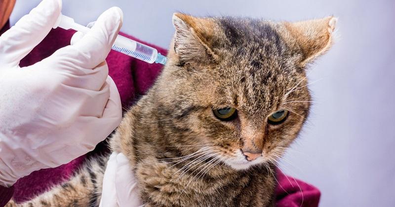 Das Grundimmunisieren der Katze kostet Geld, doch auch das Nachimpfen muss mit einkalkuliert werden.