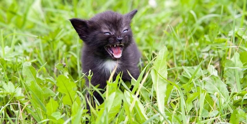 Generell gilt, dass Sie Ihre Katze so zeitig wie möglich impfen lassen sollten, was vor allem für Freigängerkatzen gilt.