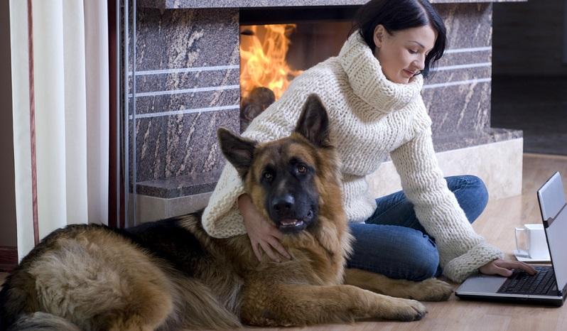 Wir lieben das knisternde Feuer des Kamins und schauen gern den züngelnden Flammen zu. Doch unser Hund wird höchstens aus Neugier angezogen und nicht, weil es ihm nicht warm und heimelig genug sein kann.