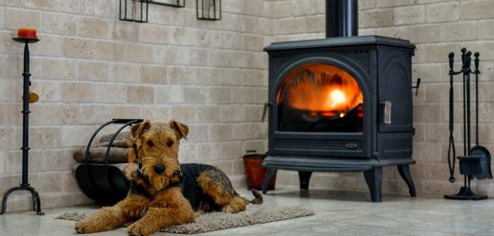 Hitze in der Wohnung: Soviel verträgt der Hund