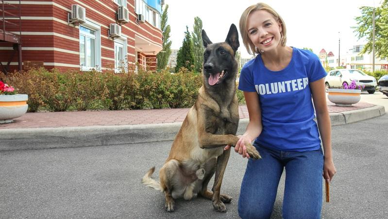 Für den Tierschutz ist es daher sehr wichtig, dem Hund Möglichkeiten für die Abkühlung anzubieten.