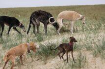 Platinum Hundefutter: Test als Alternative zum BARF auf Urlaubsreisen mit vielen Hunden?