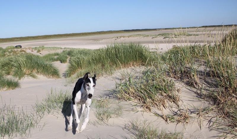 Unsere Hunde genießen einen Urlaub am Strand.