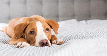 Hund apathisch und frisst nicht: die häufigsten Ursachen!