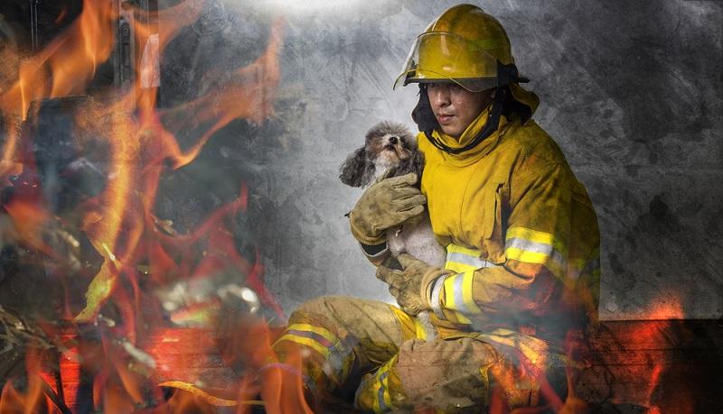 Hund apathisch: Verbrennungen beim Hund sind äußerst schmerzhaft und müssen von einem Tierarzt behandelt werden.