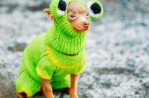 Hund zittert: Weshalb zittern Hunde?