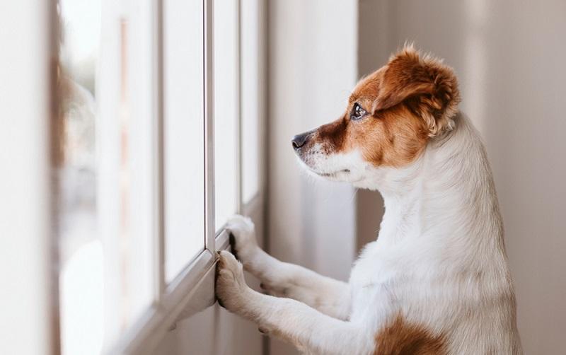 Man sollte den Hund langsam ans Alleinsein gewöhnen, damit er nicht vor Panik sich die Pfoten leckt. (#05)