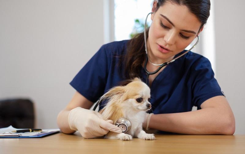 """Sollte der Hund (oder die Katze) häufiger """"rückwärts niesen"""", kann man beim Tierarzt einmal abklären lassen, ob eines der obigen Probleme vorliegt. (#01)"""