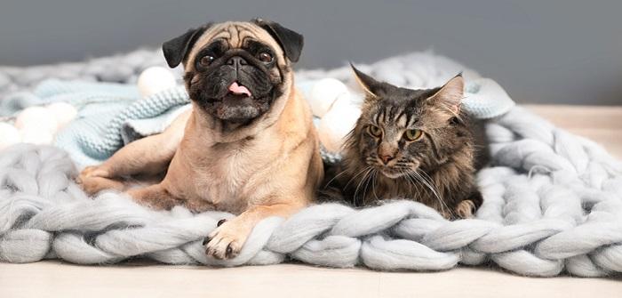 Rückwärtsniesen: Reverse Sneezing bei Hund & Katze