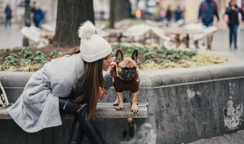 Die französische Bulldogge ist aufgrund ihrer Größe sehr gut als Wohnungshund oder Stadthund geeignet.