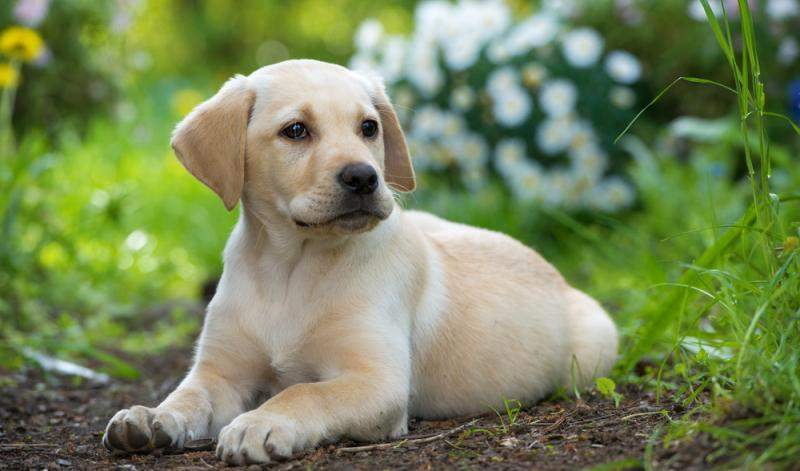 Durchschnittswerte vom Welpen zum ausgewachsenen Hund