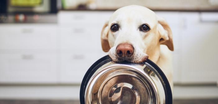 Labrador: Futter & Gewichtstabelle