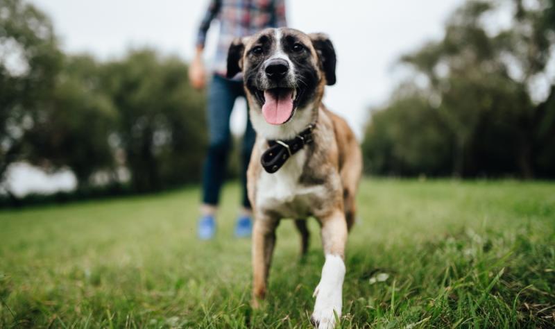 Das Hundeeis sollte in die Futter Tagesration eingerechnet werden, damit der Vierbeiner schlank bleibt. (Foto: Shutterstock - Benevolente82)